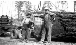 Maskinerna gjorde gradvis sitt intåg i skogsbruket.