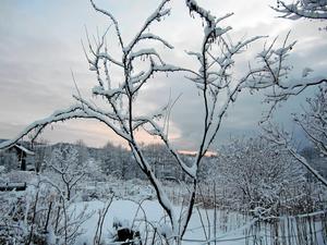 Vinterstämning på