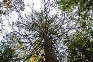 Mycket skog angreps i förra året av granbarkborren.