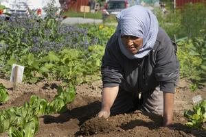 Britt-Marie Stegs berättar att de kommer hjälpa odlarna att få andra jobb till hösten.