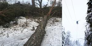 Stormen Alfrida förstörde mycket skog, och Vattenfall tar nu helikoptrar till hjälp.för att röja efter stormen Alfrida.
