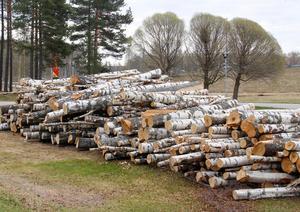 Det var inget fel på de träd som fälldes, menar naturskyddsföreningen i Timrå.