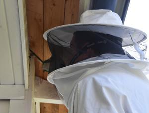 Ett bekämpningsmedel i form av ett pulver sprutas i in- och utgången till getingarnas bo.