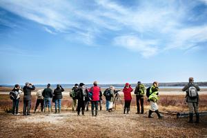 Stornäset erbjuder särskilt bra möjligheter till fågelskådning under fåglarnas flytt. Då samlas inte bara fåglar utan också fågelskådare här. Foto: Johan Engman