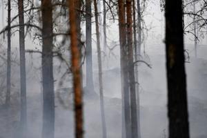 Ytterligare en skogsbrand nordväst om Sala, denna är vid Ulvsbo.Foto: Henrik Montgomery / TT