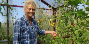 De gröna vintertomaterna som skymtar under Pia Mostens hand är vintertomater. Snart hänger hon upp tomaterna i klasar i köket och i november eller december är de redo att ätas.