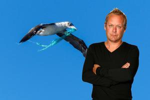 Fågeln på bilden är inte Nigel, utan en annan havssula. De är dock ganska lika varandra, enligt uppgift.Foto: Justin Gwynn / NTB scanpix / TT