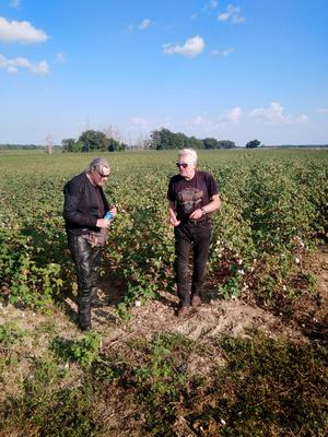 Bild: Privat fotat av Roffe Persson, Ulf Westin och Paul Fogelman. Bomullsfält vid Tutwiler, Mississippi.