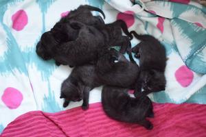 Av de sju kattungarna är tre stycken tingade.