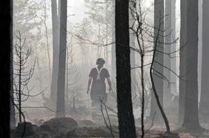 I snitt arbetade det dygnet runt 120 brandmän i det 14 000 hektar stora brandområdet. Uppskattningsvis använde de och Försvarsmaktens cirka 200 personer 50 till 70 mil brandslang.