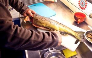 Så här ser de ut – Stora Blåsjöns gula guld.