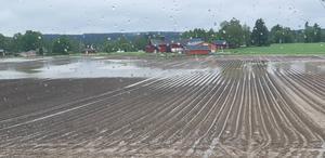 Andreas Uppgård ser skyfall som ett större hot än torkan. Foto: Andreas Uppgård