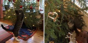 När Doris firade sin första jul var julgranen och julkulorna som lockade till lek själva höjdpunkten. Doris är en av tidningsmedarbetarnas katt och är utom tävlan.