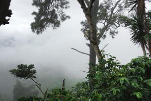 Regnskog på hög höjd, så kallad molnskog. Den här skogen i Guatemala är en av de skogar Barnens regnskog har köpt och räddat från skövling. Foto: Hakon Wikström