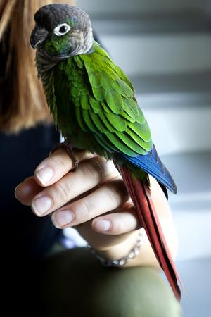 Omid är en Grönkindad conureoch har bott hos Parisa Azizi i lite drygt ett år.