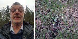 Leif Nordström hittade en snödroppe i Fogdetorp. Foto: Läsarbild