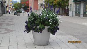 Ännu blommar det i krukorna i Bollnäs centrum