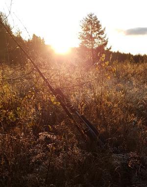Min sambos bössa i morgonljuset, precis innan vi fick börja jaga. Älgered, Bergsjö. Foto: Anna Ytell