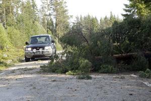 Längs ett par kilometer längs allmän väg hade det som liknade en tromb dragit fram. I dess spår kunde hundratals med omkullslagna träd räknas.