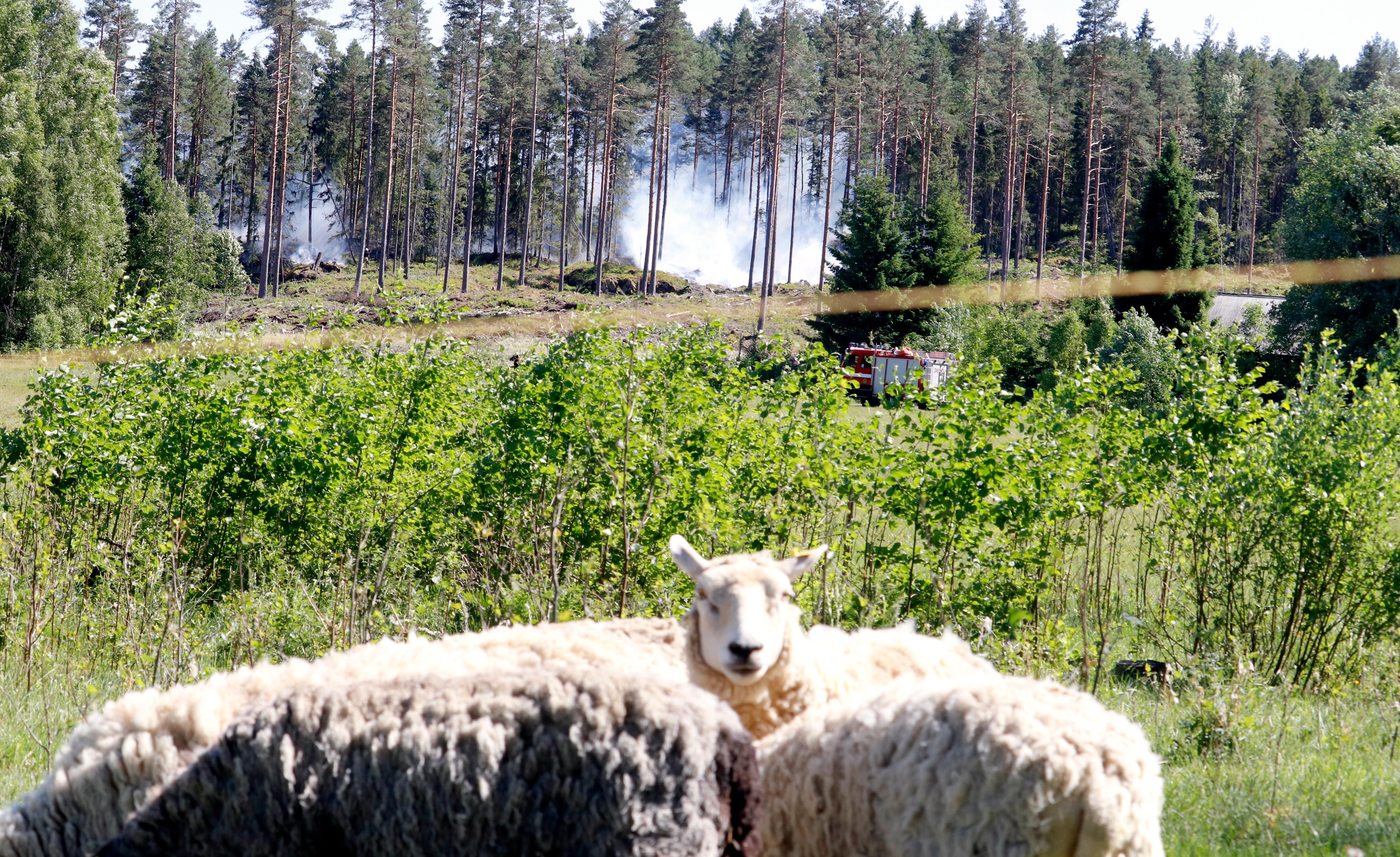 Svarslackt skogsbrand i haninge
