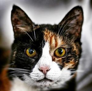 24) Missen, rymde hemifrån vid 9 års ålder och har sedan dess bott hos oss, hon är ca 16 år gammal. Hon har precis fått hem en liten kattunge så nu har hon fullt upp och hon har just nu semester från sin pensionärsvila. Foto: Emelie Hansson