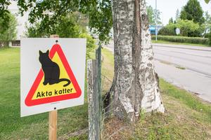 En katt gör sina behov på gräsmattan  vilket inte uppskattas av fastighetsägaren. Bilden är tagen i ett annat sammanhang.