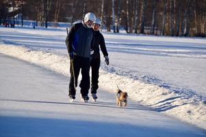Fyrfotingar med inbyggda broddar motionerade också på isen.Foto: Jörgen Notes