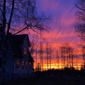 Solnedgång vid Norrängens Alpacka Bed & Breakfast. Foto: Paul Nicholls