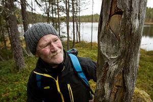 Arkeologen Bert Ove Viklund har hittat flera gamla ristningar i Vädåtbergets träd. Kanske samiska.