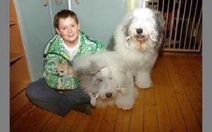 Det bor många hundar hemma hos Wallströms. Mattes sono Liam har sin systers chihuahua Zita i knäet. Med på bilden är även Villas Cruella at Dizzny samt Fillodoxia.