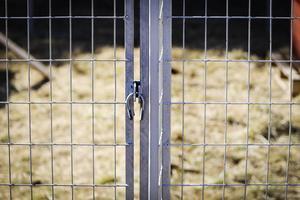 Daniel Birgersson har svårt att tro att hundarna själva lyckades få loss haken från stängslets insida.