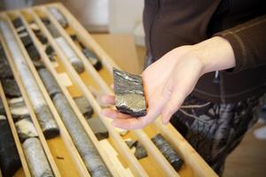 Arkivbild på borrkärnor från Aura Energys provtagningar i Oviken. Proven visar alunskiffer, uran och vanadin bland annat.