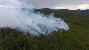 Det brinner i skogen i Tandö utanför Malung. Helikopter har satts in för att vattenbomba branden. Foto: Göran Eriksson