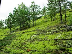 Och en till bild med den grön mossan.