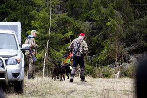 Under fem timmar sökte jägarna efter björnen. Men utan framgång. Inte ett enda spår fick hundarna. Något som fick jägarna att tvivla på att det över huvud taget funnits en björn i området de senaste dygnen.