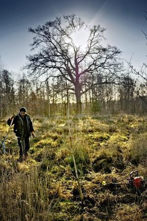 För de små. Imad Eldin planterar ett kastanjeträd, ett av alla träd i den nya barrskogen som växer fram i Karlslunds kulturreservat.