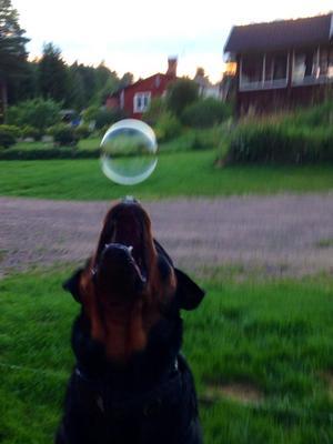 Fokus på bubblan