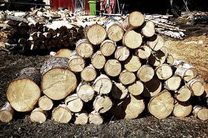 Ved från träd som har avverkats på din privatbostad kan du sälja för upp till 40 000 kronor utan att behöva skatta för pengarna.