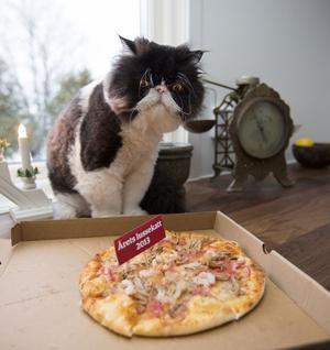 Tungviktaren Grodan, femårig perser från Gävle, fick nästan en tredjedel av läsarnas röster och tog hem titeln Årets lussekatt 2013. Han firade segern med favoriträtten pizza, men till vardags har han stränga order att hålla igen på godsakerna, berättar hans matte Matilda Norin.