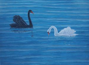 För knappt två år sedan fick Gunnar Forsman se något han aldrig sett förut, en svart svan i den svenska naturen. Målning av Gunnar Forsman.