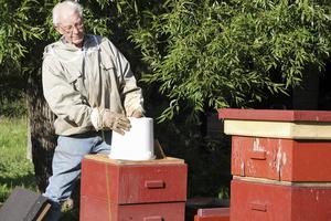 Nu är årets sista honung skördad och Olov Ohlanders placerar ut sockerlag i varje bikupa.