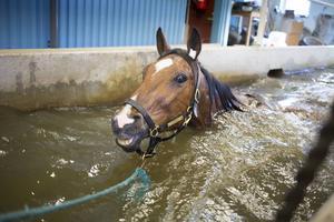 Simträningen uppskattas av de allra flesta hästarna, även om de kan tycka att intervallpassen är jobbiga.