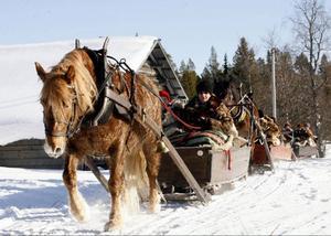 Gudrun och Einar Westlund med hästen Troll-W.E från Hedeviken tillhör veteranerna i forbondegänget. På tisdag kör de in på Malmplatsen i Röros