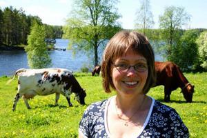 Bonden Mica Kristoffersson, Singsjöböle med 3 av gårdens 27 mjölkkor som betar i sluttningen ner mot Singsjön. Gårdens kalvar, höns och kalkoner får nöja sig med mindre ytor att röra sig på än kossornas stora beteshage.