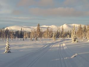Snö, sol och skidåkning i perfekta skidspår. Kan det bli bättre?Bilden tagen 23/12.