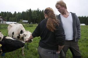 Mattias Claesson och Anna Walfridsson tycker om att spendera tid med kossorna i hagen.