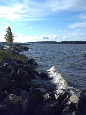 Varje morgon tar jag innan arbetet en promenad längs med vattnet vidÖster Mälarstrand. Varje dag bjuder på nya skiftningar i vatten och vind.Den här morgonen rullar vågorna in mot stranden och vinden griper tagi de späda träden. Det är härligt att vara så nära naturens element intelångt från staden...!