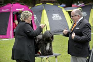 Domaren Arne Fors och Kajsa Andreasson och  Misty, Tibetansk terrier.