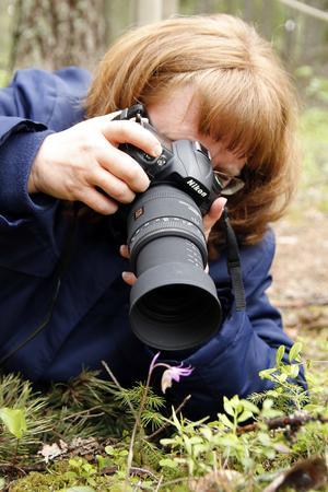 Många har fotograferat den lilla nornan på Villmyran i Nordingrå.