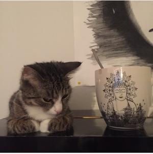403) hos meja & mej bor det här lilla livet. många tror att hon är en kattunge, men icke, hon är bara liten. mixi heter hon, döpt efter en vän.förutom att hon är liten & söt så är hon ett riktigt öschlås, men ett oerhört älskat sådant. Foto: Erika Bergström